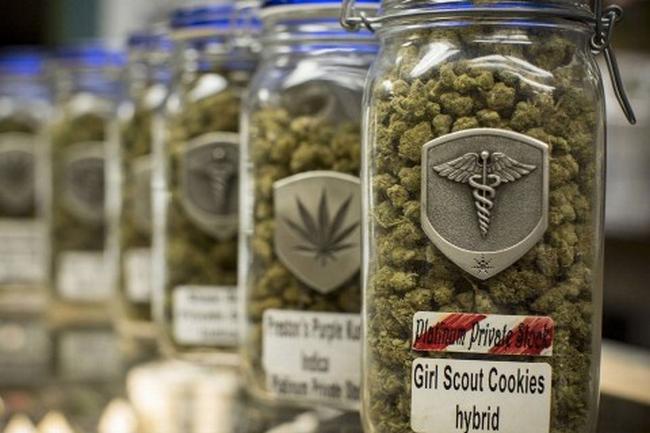 bocaux weed graine de cannabis