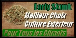 vignette graine de cannabis early skunk
