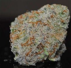 white label rhino