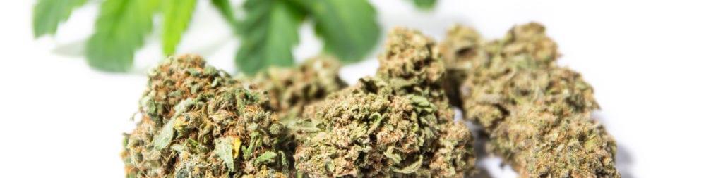 cannabis cbd légal sans thc suisse