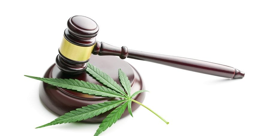 cbd que dit la loi legislation