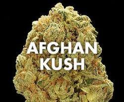 afghan-kush