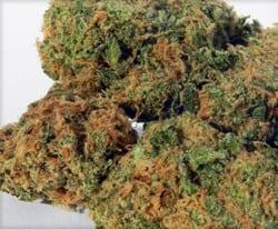 Mazar tete de cannabis