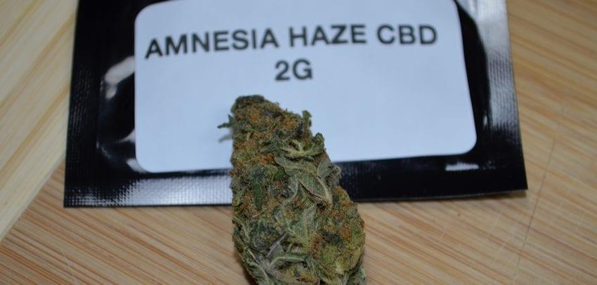 amnesia-haze-cbd-en-tete