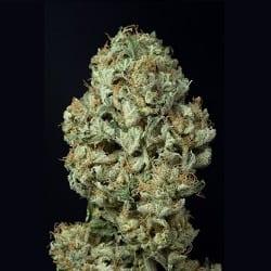 dinamex weed